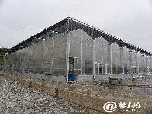 pc阳光板连栋温室大棚建设厂家