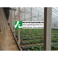 蔬菜大棚-冬暖式有立柱-寿光市万禾农业科技有限公司