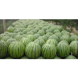 泗水西瓜20万亩  产地供应