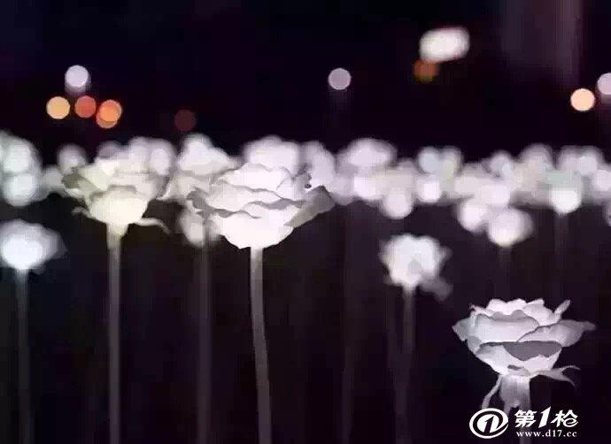 玫瑰花埃菲尔铁塔微信头像