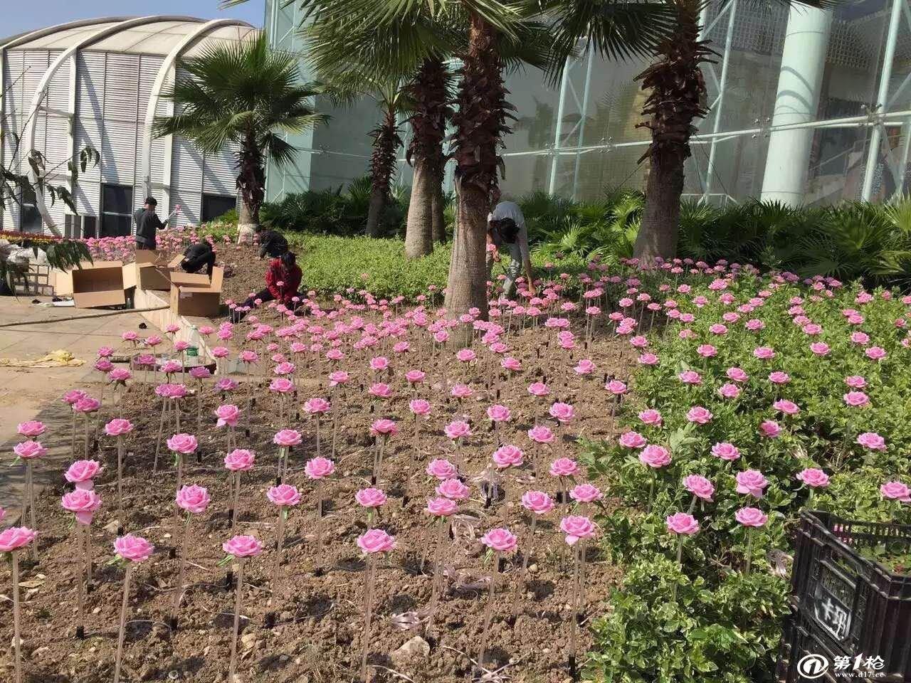 埃菲尔铁塔法式玫瑰花图片
