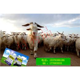 提高肉羊采食量微生态食槽无剩料