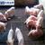 养殖业漏粪网畜牧育肥铁丝网生产厂家缩略图3