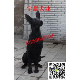 二三个月的小墨界黑狼犬多少钱 纯种墨界黑狼犬幼犬多少钱
