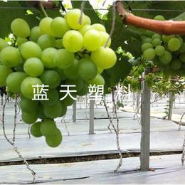 供应蓝天塑料-蔬菜水果棚膜