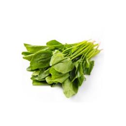 新鲜蔬菜新鲜精选菠菜批发