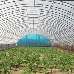 建造蔬菜大棚的六大误区