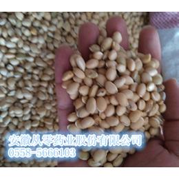 白扁豆优质白扁豆常年大量供应