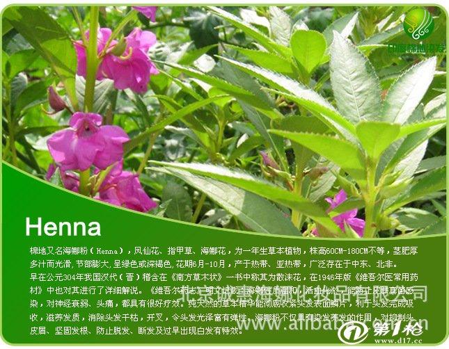染色笔 印度进口棉地海娜粉批发 正品防伪查询  棉地是海娜花的精叶子