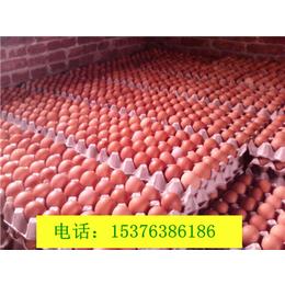 增加蛋壳厚度增加蛋重微尔康壳红素没有破壳蛋