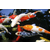 淡水草鱼苗批发观赏锦鲤鱼苗价格放生泥鳅鱼苗批发价格缩略图2