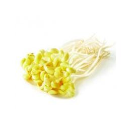 新鲜蔬菜 豆芽批发价格