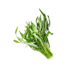 新鲜蔬菜空心菜批发价格