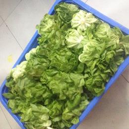 增城单位饭堂蔬菜配送公司-鼎魁农产品有限公司