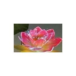 供应爱的光纤花-光纤莲花(佛教用品)
