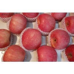 山东红富士苹果销售中心冷库苹果市场批发价格