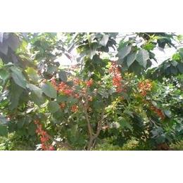 上海博翼有机农场多种果树认种认养进行中