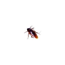 巩义灭蟑螂岚信害虫防治服务公司专业灭虫除鼠