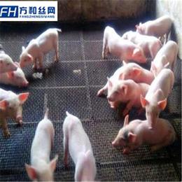 猪羊踏板网-猪羊漏粪网-畜牧养殖网厂家