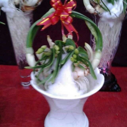 水仙花盆栽九江哪里可以买到