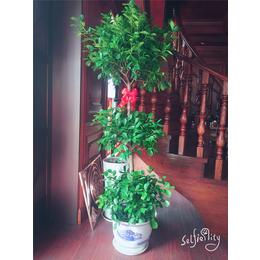 景成源环境景观 家庭花卉展示