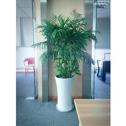 办公室花卉展示 花卉批发租摆