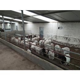 2017特卖五竹田园牧歌生鲜羊肉