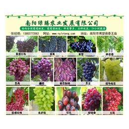 南阳葡萄哪里好,葡萄,绿藤葡萄庄园欢迎你