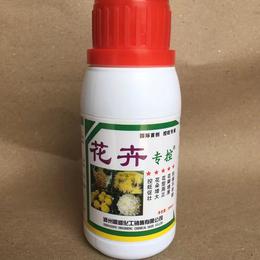 花卉专用叶面肥控制菊花旺长花朵增大花瓣增厚花期长农药批发