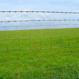 径钢纬铁牛栏网  养牛 养马铁丝网围栏 圈地专用草原网