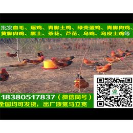 荆州麻羽绿壳蛋鸡苗麻羽绿壳蛋鸡苗走势