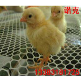 诺克 塑料平网 散养家禽养殖网 白色养殖网 小鸡漏粪网