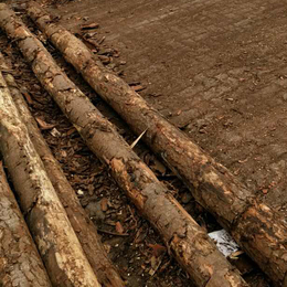 打桩用木材   2-6m   湿地松   10cm直径