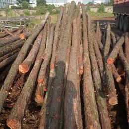 打桩用木材   2-6m 皓麟建材 10cm直径