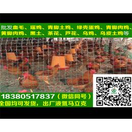 苏州淮南王土鸡苏州淮南王土鸡孵化厂