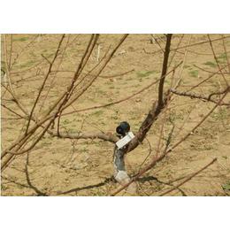 声音驱鸟器|西安声音驱鸟器|同凯电子(优质商家)