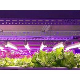 农用植物生长灯_河南农用植物生长灯_同凯电子(优质商家)
