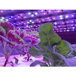 led植物补光灯|led植物补光灯多少钱|同凯电子