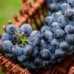 新鲜 夏黑葡萄