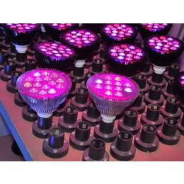 甘肃植物补光灯哪家好,同凯电子,植物补光灯哪家好