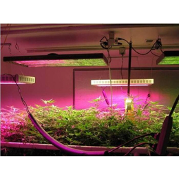 宁夏农用植物生长灯价格,同凯电子,宁夏农用植物生长灯