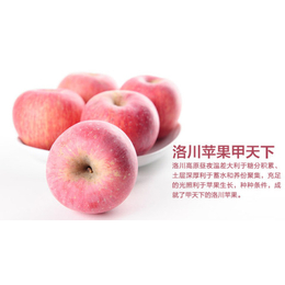 鲜农同城     陕西苹果缩略图