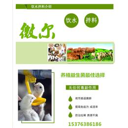鸭子喂益生菌促进消化防止拉饲料粪便