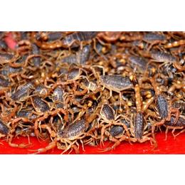 湖北金蝎养殖基地湖北济世生态农业开发有限公司