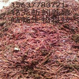 河南养殖的蚯蚓苗出售156377找铭尧基地83721