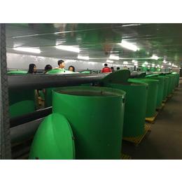 批发定制优质玻璃钢水槽 养殖槽 耐腐蚀 耐高温 抗氧化鱼池