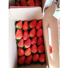 乾纳瑞农业_五家渠甜查理草莓苗_甜查理草莓苗批发