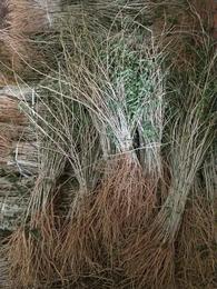 吉林枸杞苗杨坤苗圃一手货源