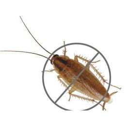 四害蟑螂防治 虫害清除哪家好 家庭空气清洁缩略图
