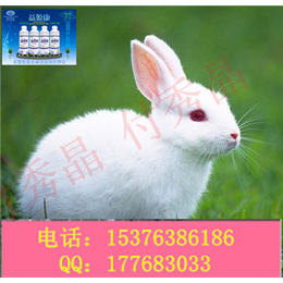 兔子拉稀粪便有很多饲料残渣怎么办